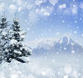 Winter background with snow and spruce