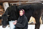 stock photo of milkmaid  - Farmer woman in traditional Russian dress milking a cow in winter yard - JPG