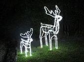 Christmas Reindeer Lights