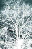 White Silhouetted Tree