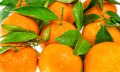 Orange Mandarine With Green Leaves. Closeup Of Tangerine
