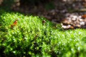 Patch Of Bright Lit Moss In A Forest