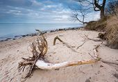 foto of driftwood  - Beautifu rocky sea shore with driftwood trees trunks at sunrise or sunset - JPG