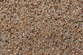 picture of turn-up  - Seaside sand that with close - JPG