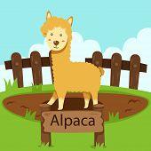 pic of alpaca  - Illustrator of Alpaca in the zoo for education - JPG