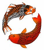 stock photo of koi tattoo  - Ink and digital illustration of two asian carps - JPG