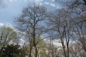 Spring Trees Of Nyc Central Park