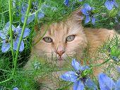 Cat Among Flowers 2