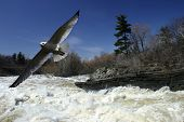 Möwe fliegen über den tobenden Fluss