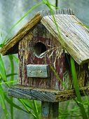 Little Birdhouse