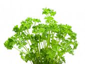 stock photo of shiting  - Fresh parsley isolated on white - JPG