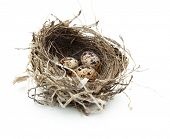stock photo of bird-nest  - Urban birds nest with three eggs inside - JPG
