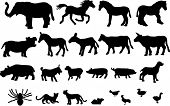 Wild and farm animals high detail vector