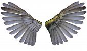 two wings isolated on white background