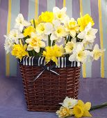 bouquet of flowers narcissus in the spring  in basket