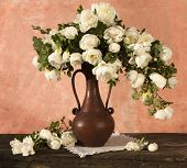 picture of white roses  - white roses - JPG