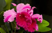 stock photo of windchime  - Orchid flower  - JPG