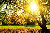Sunlighted gele herfst boom in een park