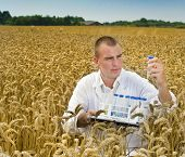Agriculture scientist examining samples in rye field