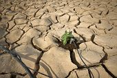 Постер, плакат: Система капельного орошения полива небольшой базилик растений на трещины почвы в пустыне