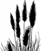 image of pampas grass  - Detailed Pampas Grass Silhouette Black and White - JPG