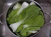 Chinese Vegetable Bok Choy