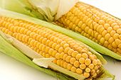 stock photo of zea  - Corncob - JPG