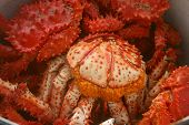 stock photo of sakhalin  - Red crabs with eggs - JPG