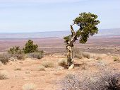 broken down tree in the desert