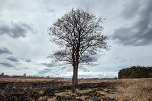 Natural Landscape Dry Tree Gray Clouds, Drought, Shortage, Shortage Of Fresh Water. poster