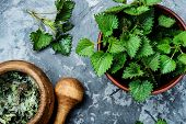 Stinging Nettles,urtica Medical Herb poster
