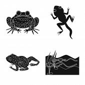 Isolated Object Of Fauna And Reptile Logo. Collection Of Fauna And Anuran Vector Icon For Stock. poster