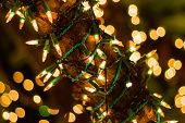 Decorative Outdoor String Lights Hanging On Tree In The Garden At Night Time Festivals Season - Deco poster