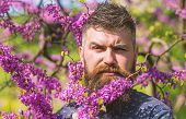 Hipster Enjoys Spring Near Violet Blossom. Fragrance Concept. Man With Beard And Mustache On Strict  poster