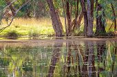 Beautiful Water Reflections In Early Morning Light On A Still River In Australia poster