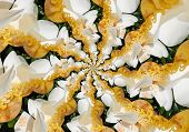 Effect Droste Of  Close-up Of White Flower Of Magnolia Grandiflora With Its Pistols/ The Magnolia Gr poster