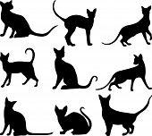 Cats Black.eps