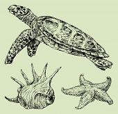 Sea Creatures.eps