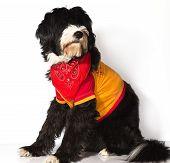 Gim Dog