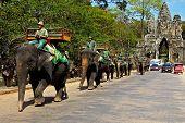 Elephants At Angkor Wat