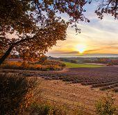 Beautiful autumnal lavender field