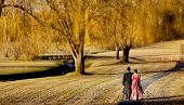 image of indian wedding  - Young Indian wedding couples walking in the park - JPG