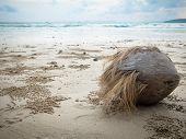 A Coconut On The Beach