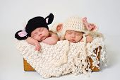 stock photo of twin baby  - Fraternal twin newborn baby girls sleeping in a box and wearing crocheted black sheep and lamb hats - JPG
