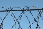Barbed Wire Close-up