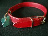 Red Dog Collar With Tag