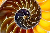 nautilus shell section