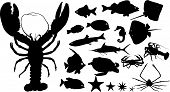 image of guitarfish  - Many silhouettes of fish and other water animals - JPG