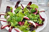 Salad with radicchio