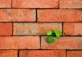 Plant_bricks